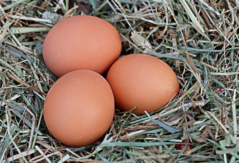 jak sprawdzić czy jajka są świeże