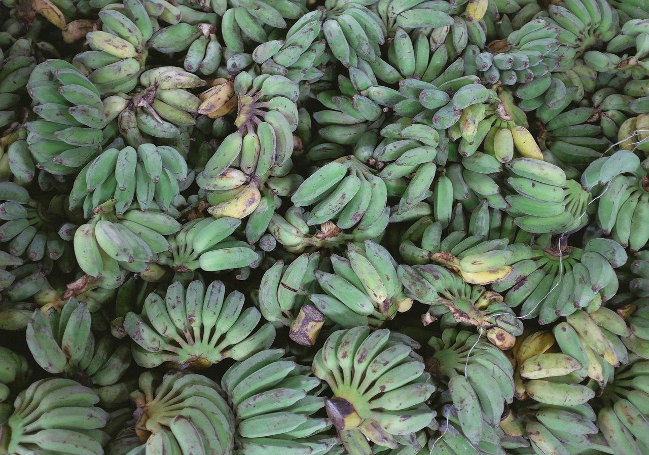 plantan banan warzywny