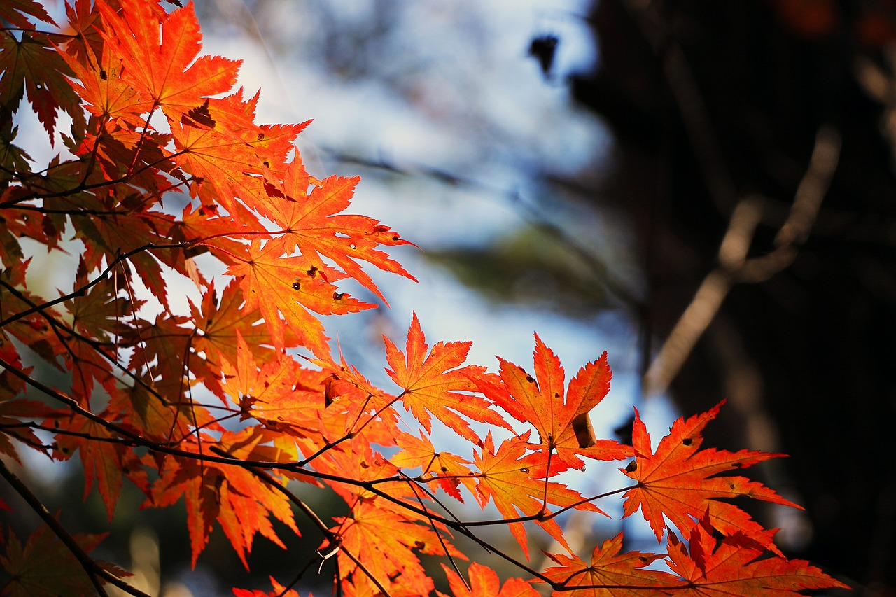 piątek jesien w lesie