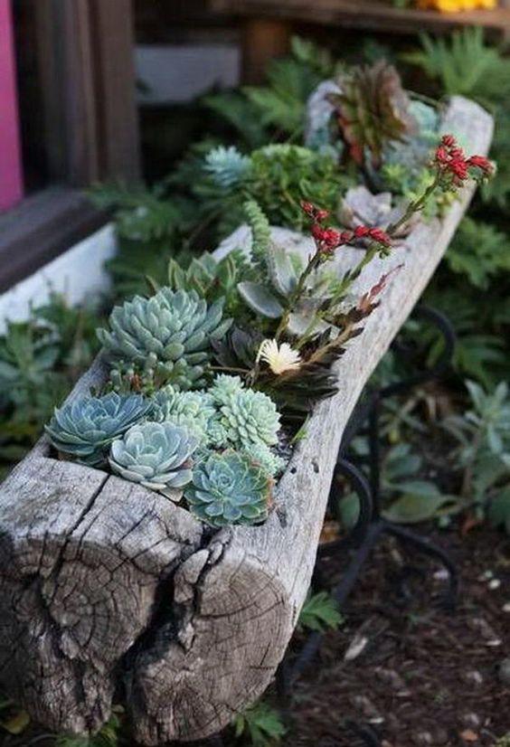sukulenty w ogrodzie