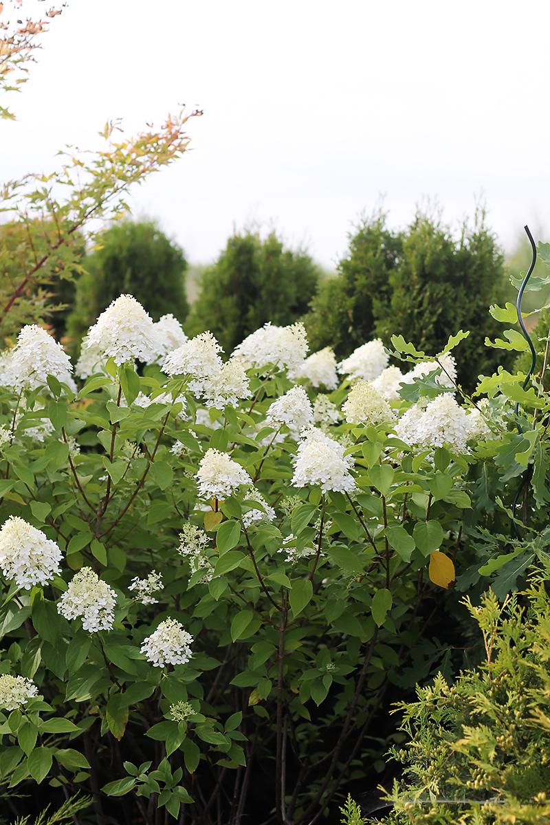 kwiaty ogród codojedzenia